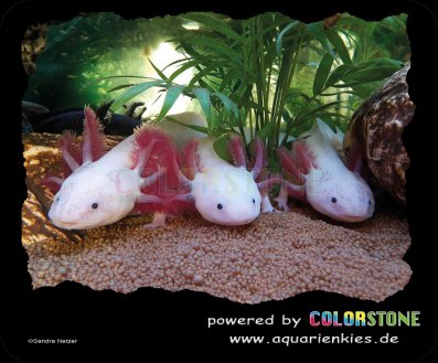 Mousepad mit Axolotl by COLORSTONE