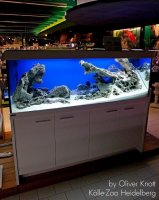 Aquarium with aquarium rocks