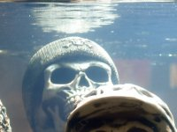Skull with knit hat